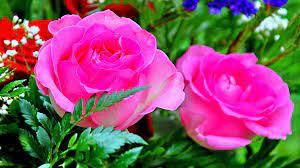 Rose Wallpaper Hd 3d