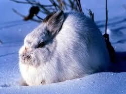 Pildiotsingu Metsloomad talvel tulemus