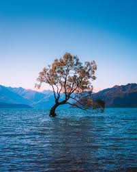 hd photos nature. Wonderful Nature Brown Leaf Tree At Water During Daytime Throughout Hd Photos Nature