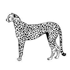 Marvelous Design Inspiration Leopard Coloring Page Leopards Pages