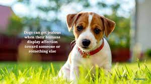Did You Know Dogs HD Wallpaper New Tab ...