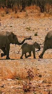 Elephants, family, walk 1242x2688 ...