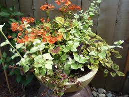 Small Picture Container Garden Design