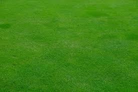grass field texture. Grass Plant Field Lawn Meadow Texture Spring Green Soil Grassland Mower Rush Mow Halme Flooring T