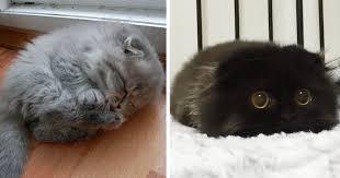 cute fluffy kittens.  Kittens In Cute Fluffy Kittens E