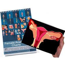 Anatomy Flip Charts Female Anatomy Flip Charts With Uterus Model