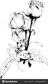 Bouquet Of Flowers Drawn Flowers Healthy