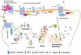 Gpcr Signaling Frontiers G Protein Coupled Receptors Gpcrs In