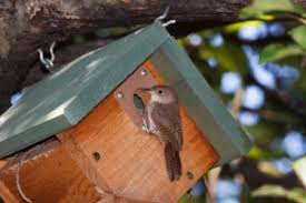 wren bird house plans. Want To Build A Bird House Check Out These Easy Plans For Wren