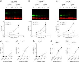 A Recombinant Conjugated Pneumococcal Vaccine That Protects