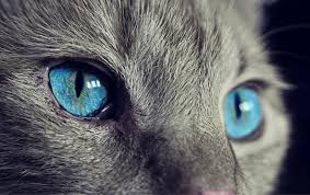 Pics Of Eyes Eyes Images Pixabay Download Free Pictures