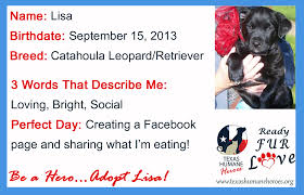ready fur love community adoptions 11 22 13 texas humane heroes ready fur love