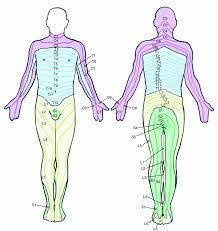 leg pain is lumbar radiculopathy