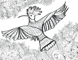 Printable Robin Bird Coloring Pages For Adults Realistic More