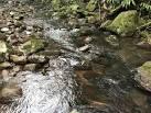 imagem de Caraá Rio Grande do Sul n-19
