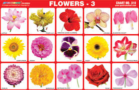 Flower Chart This Flower Meanings Chart Translates Your Feelings Into