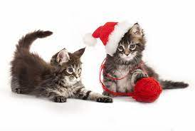 Cats Christmas White Background ...
