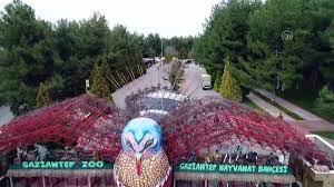 Gaziantep Hayvanat Bahçesi'nin müzmin bekarlarına eş aranıyor - Dailymotion  Video