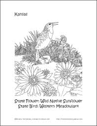 Small Picture Kansas Printables Kansas State Bird and Flower Coloring Page