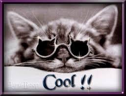 """Résultat de recherche d'images pour """"blinkies gratuits chats youpi"""""""