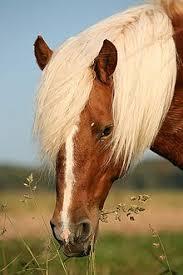 """Résultat de recherche d'images pour """"marques du cheval liste"""""""