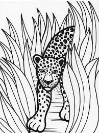 Small Picture Leopard Rainforest Predator Coloring Page Download Print