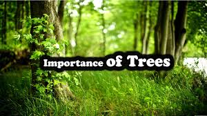 importance of trees in our life essay in english the college study