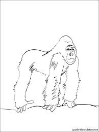 Gorilla Kleurplaat Voor Kinderen Gratis Kleurplaten