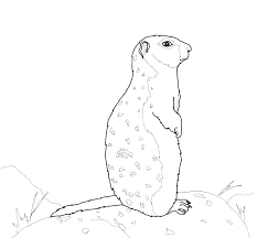 Squirrel Coloring Page Astonishing Squirrel Pictures To Color Flying