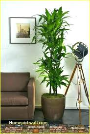 best indoor office plants. Best Indoor Plants Low Light Office  . L
