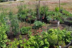 Small Picture My First Garden Photos 7 different community garden plot designs