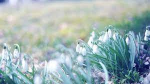 Early Spring Wallpapers - Top Free ...