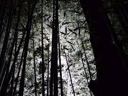 幽玄な世界竹林の小径ライトアップ 京都 嵐山 花灯路はなとうろ