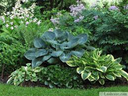 Small Picture Hosta Garden Designs Garden Design Ideas