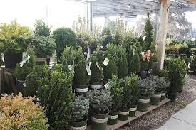 garden store morristown nj. image may contain: plant, tree, flower and outdoor garden store morristown nj w