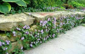 Best 25 Climbing Flowers Ideas On Pinterest  Climbing Roses Climbing Plants For Fence