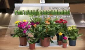 Растущий <b>led фитосветильник Здоровья Клад</b> 9 Вт для цветов