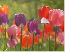 Billedresultat for forårs blomster
