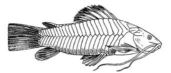 Small Picture Catfish Coloring Pages for Kids Best Place to Color