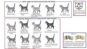 Tabby Patterns Simple STRIPED SPOTTED AND TICKED CATS