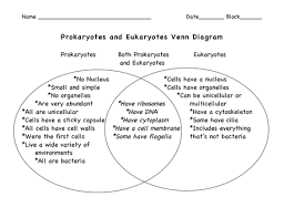 Compare Prokaryotic And Eukaryotic Cells Venn Diagram Types Of Cells Ninth Grade Biology