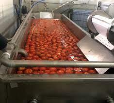 Sebze Yıkama Makineleri - Tüm Kategoriler - Gıda - MK Makine Kimya Tekstil  San. Tic. Ltd. Şti.
