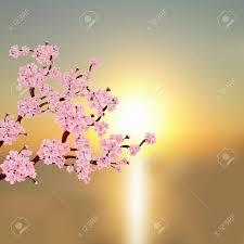 Cherry Blossom Backdrop Stock Illustration