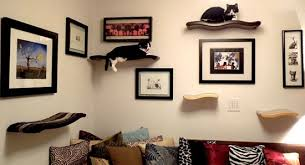 Floating Shelves For Cats Amazing Beautifully Crafted Floating Cat Perches From Kascade Designs