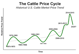 Cattle Markets Have Many Moving Parts Beefresearch Beef