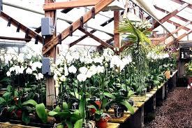 home goods plants blvd city ca home goods artificial plants home home goods plants home goods