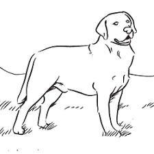 Labrador Retriever Coloring Page Art Dog Coloring Page Dogs