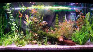 Fish Tank How To Keep Koi In A Fish Tank Howcast The Best How To Videos