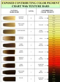 Hair Colour Level Chart 28 Albums Of Color Chart Hair Levels Explore Thousands Of