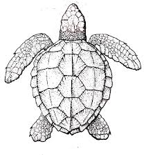 Small Picture Realistic Sea Turtle Coloring Page Download Print Online